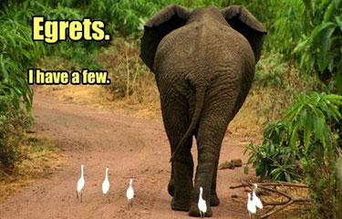 egrets-i-have-a-few