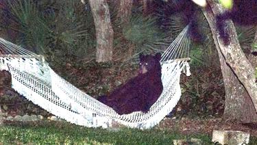 BearHammock