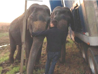 ElephantsTruck