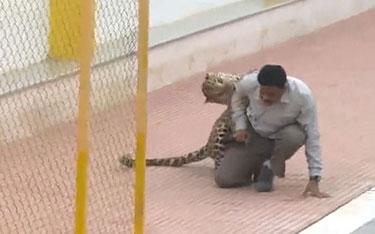 LeopardBangalore