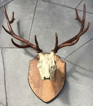 HemingwayElkAntlers2