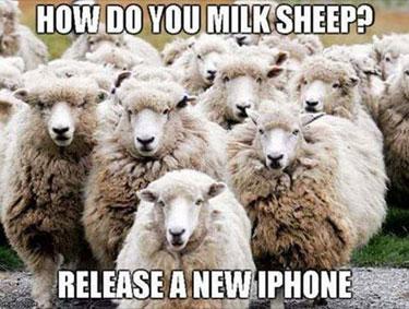 milksheep